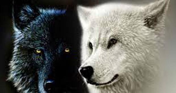 pribeh-dvoch-vlkov